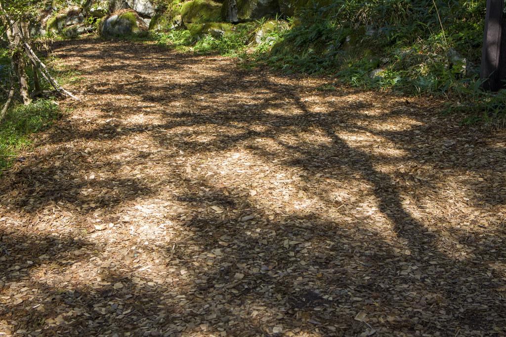 高知縣內生產的檜木碎片,鋪設在步道上。圖片提供:劉建志。