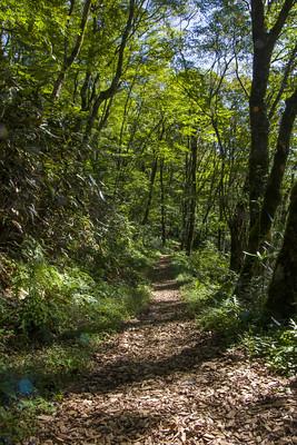 森林步道一景。圖片提供:劉建志。