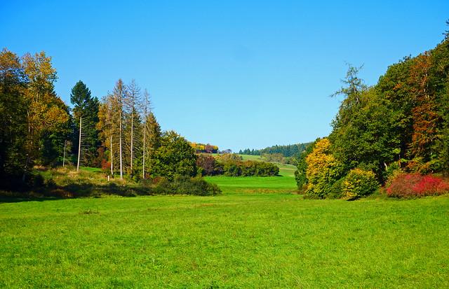 Herbstliche Waldränder