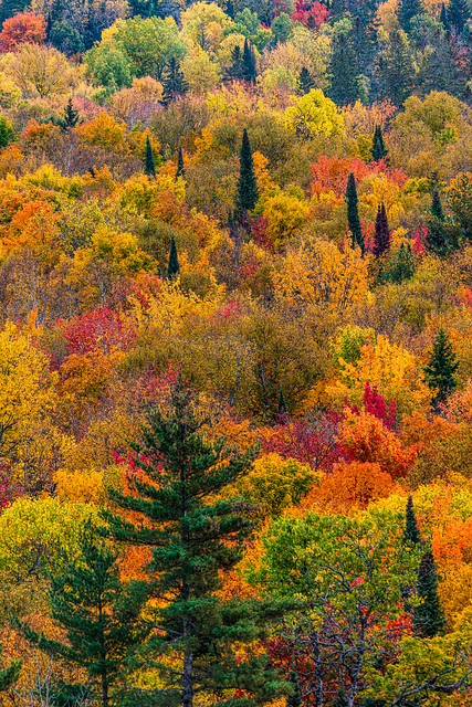 Vertical Fall Colours