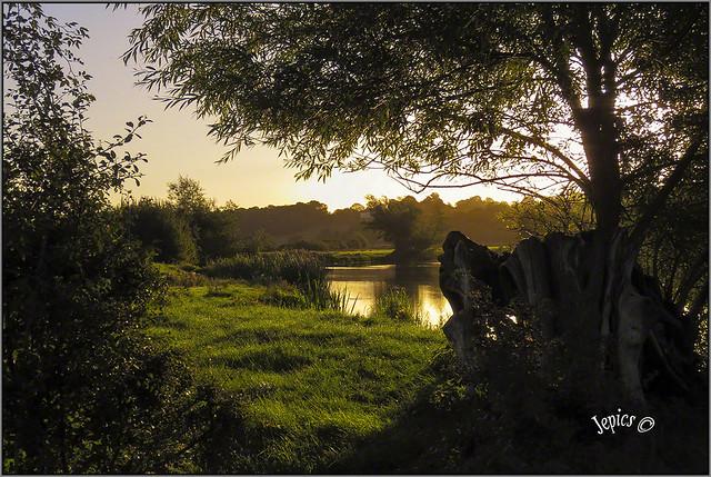 Beneath The Riverbank Willow Tree.
