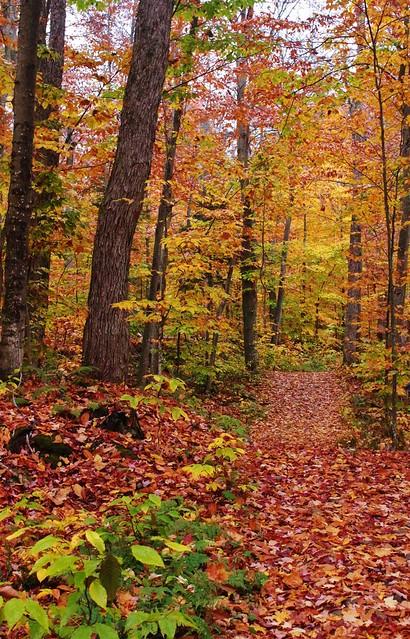 Sentier en octobre