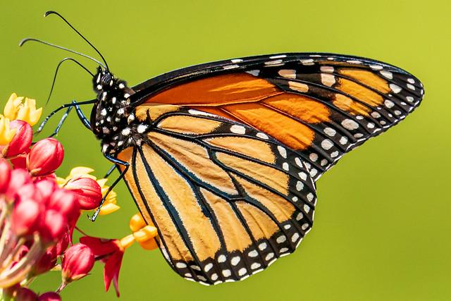 Monarch Rest Stop