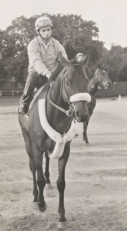 Keeneland Library Thoroughbred Times Collection- Run the Gantlet workout, undated