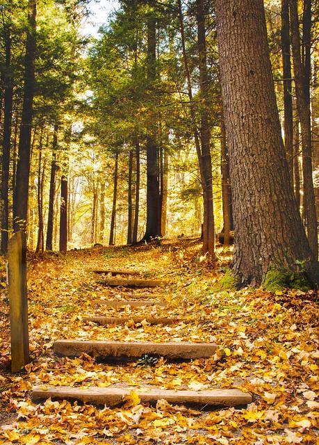 Autumn in Grayson Highlands