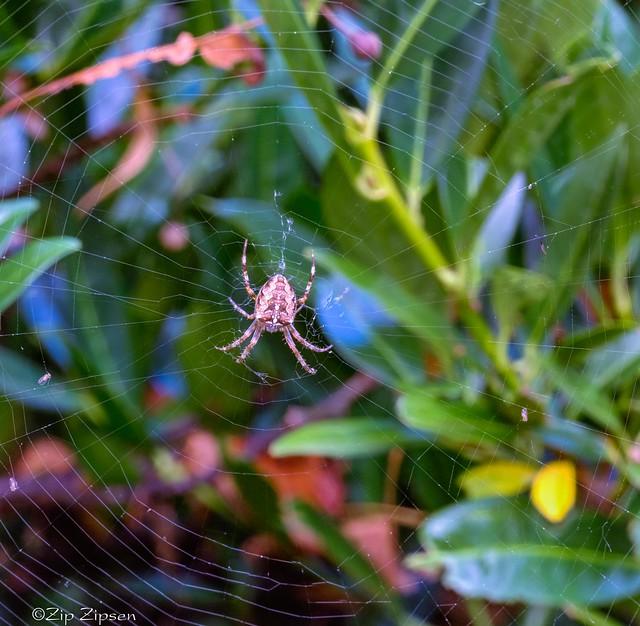 20211010_GFX50s_SK120_Spider-1501