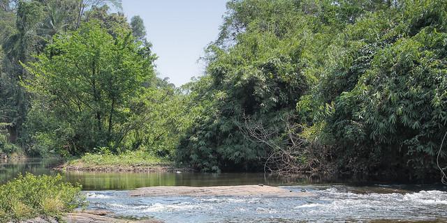 Janaki Forest 6