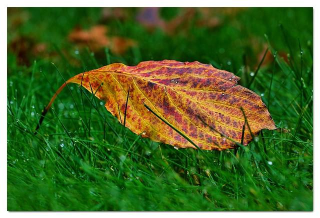 2021_68A14654 A Single Leaf