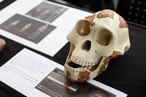 Celebrating International Archaeology Day - Oct. 16