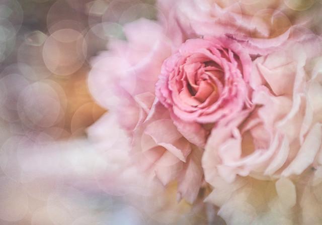 Roses #284