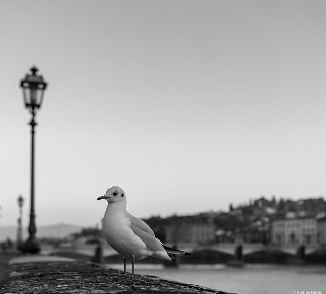 Urban Seagull.....