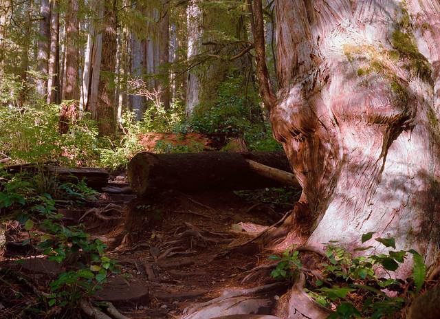 Light on the Gnarly Stump