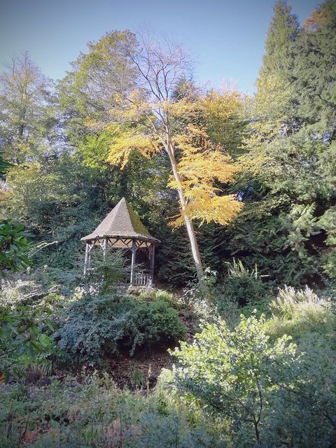 Witch's Hat in the Autumn