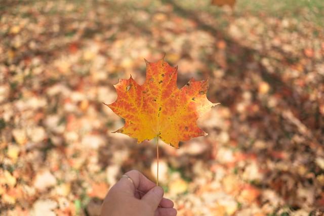 The Maple Leaf our emblem dear