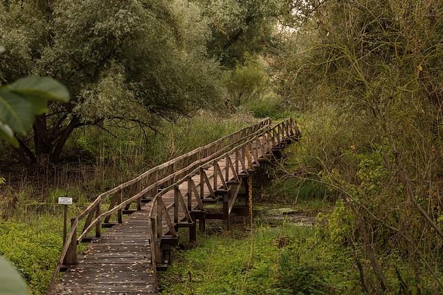 Altrheinbrücke