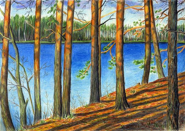 Pines of Lake Beloe, Seliger.