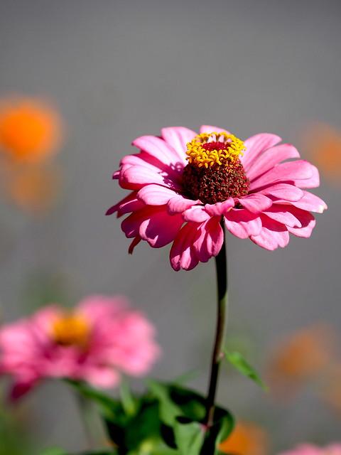 OMD EM1 10.15.2021 flower 1