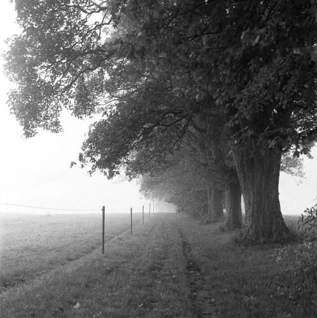 Stien en diset morgen