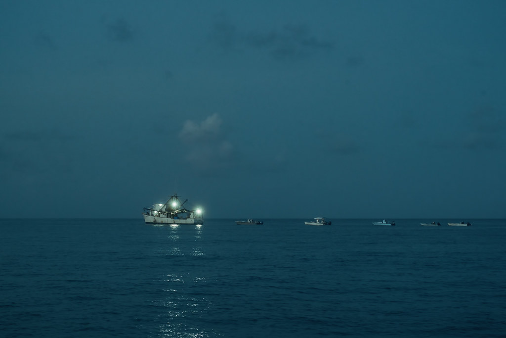Shrimp boats at dusk