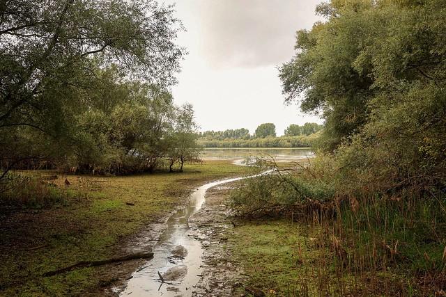 Naturschutzgebiet Biedensand am Rhein