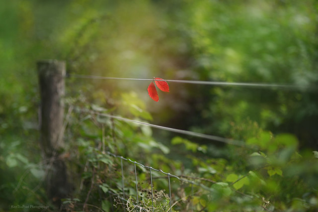 Happy Fence Friday... #HFF