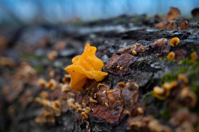 Little mushroom on a felled tree