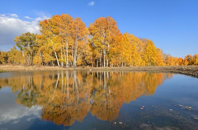*Autumn impression on Kolob Terrace Road*