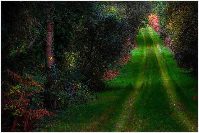 Petit Chemin....