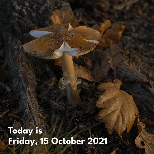 Today is Friday, 15 October 2021