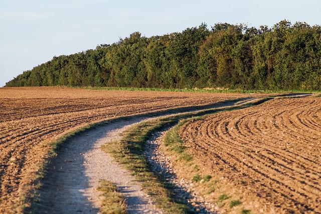 Trail between two plowed fields