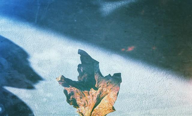 Single leaf and shadow play