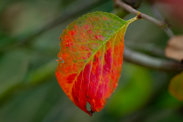 A colourful leaf - My entry for todays