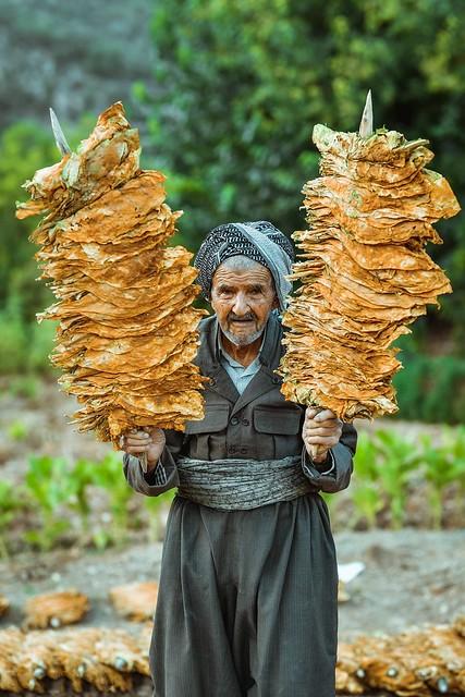 Kurdistan   Tobacco