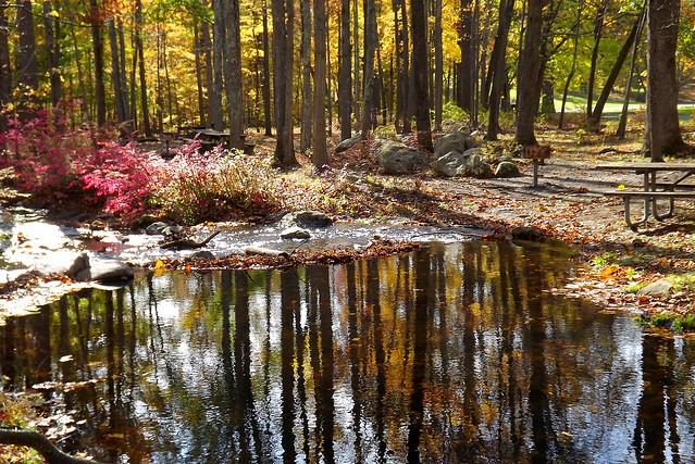 Ringwood Park Fall Reflections