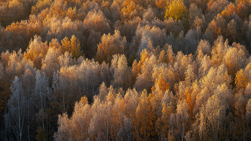 art of the fall (Explore) by Sergey S Ponomarev