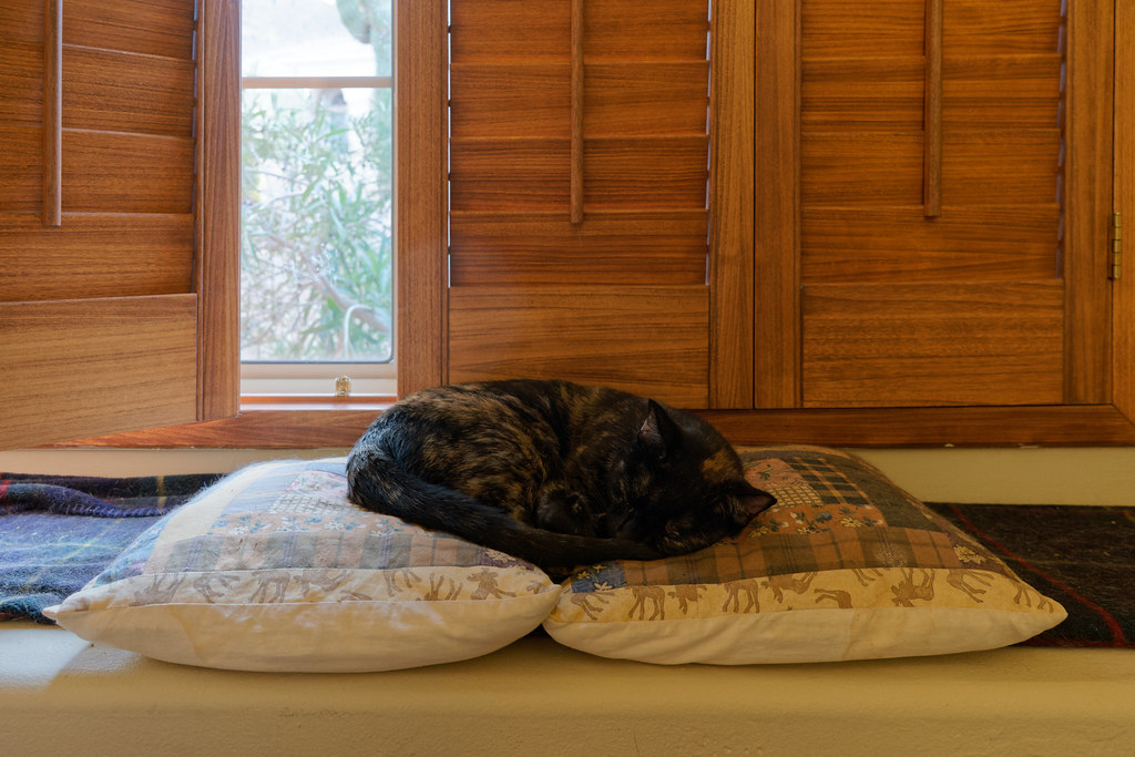 Our cat Trixie sleeps on throw pillows in front of my window on July 11, 2021. Original: _CAM1915.arw