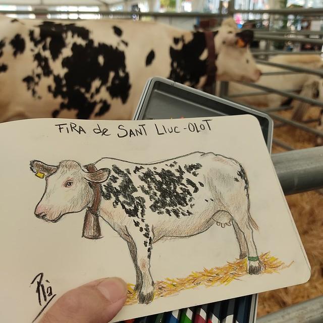 Vaca Frisona.