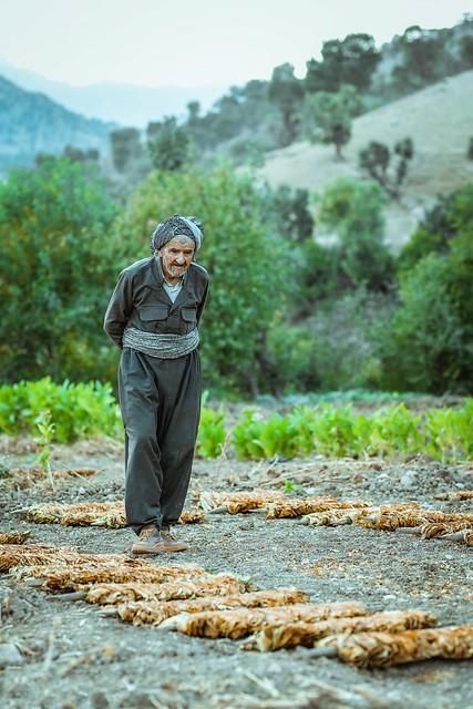 Kurdistan   NATURE Tobacco