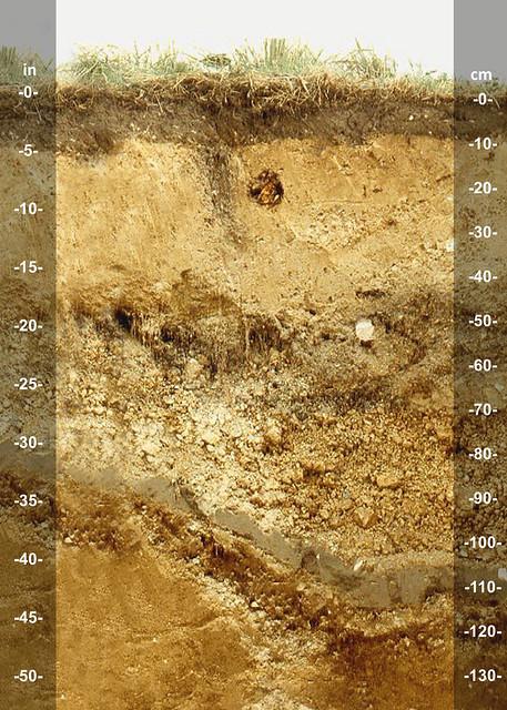 Taupoa soil series NZ