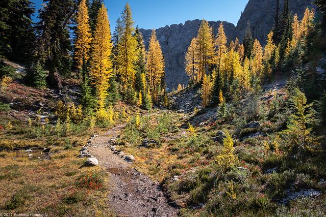 Path through Golden Larches