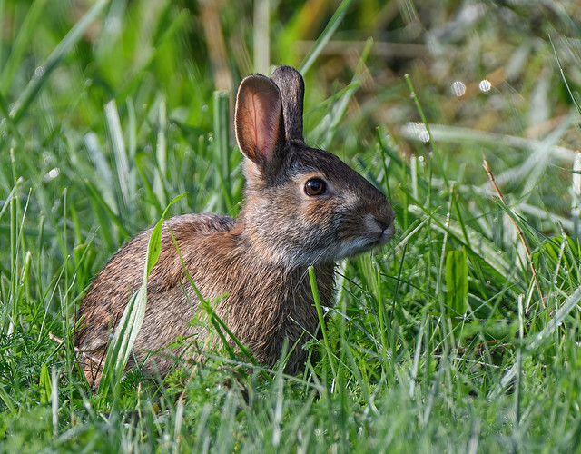 Rabbit 10-15-2021