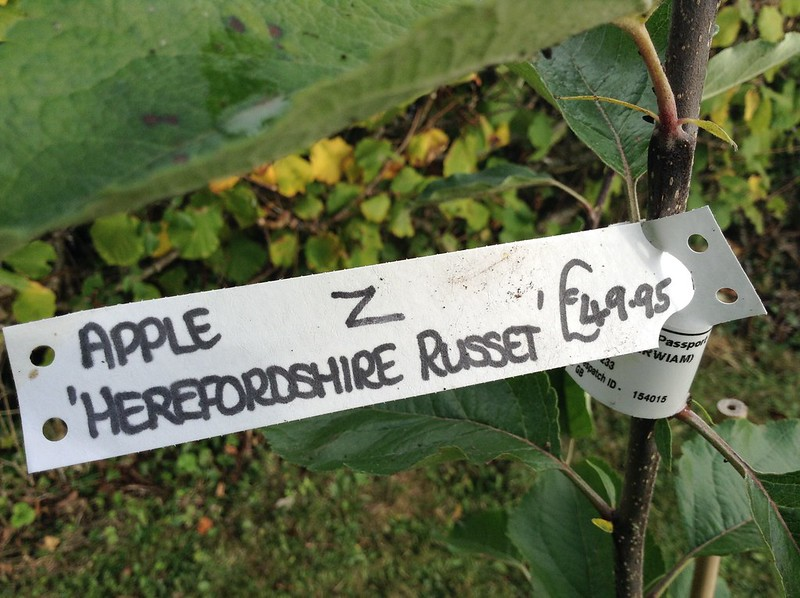 Herefordshire Russet - Apple tree label