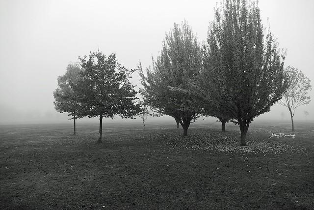 Autumn Misty Landscape 174a-1