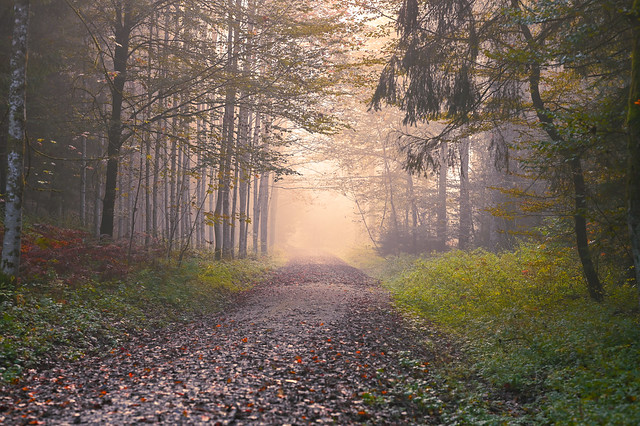 early autumn at morning