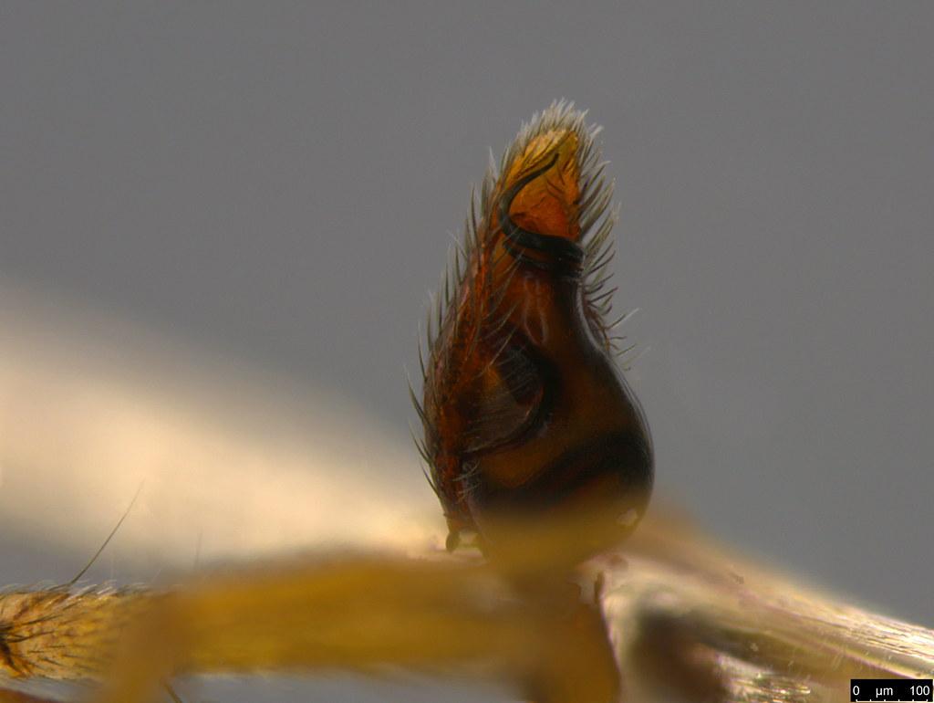 3f - Araneae sp.