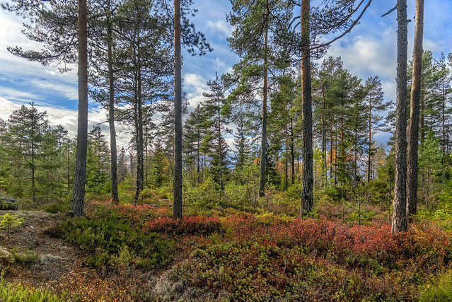 Hiking in the autumn forest, Norway