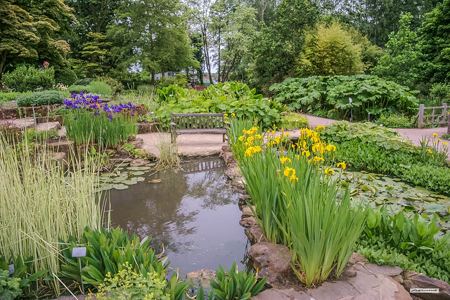 Rock Gardens and Water-Lily Pond at Wisley Gardens, Surrey, England.