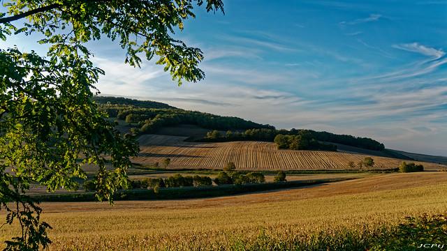 Lumière dorée sur les champs