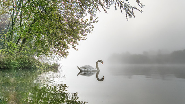 Misty Morning Revisited