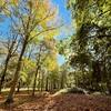 #automne #autumn #forest #bois #balade #promenade #tempsdautomne #versaillesgardens #versailles